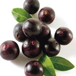acai berries LipoNutra