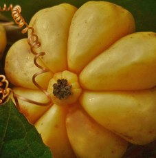 Garcinia cambogia what does it do