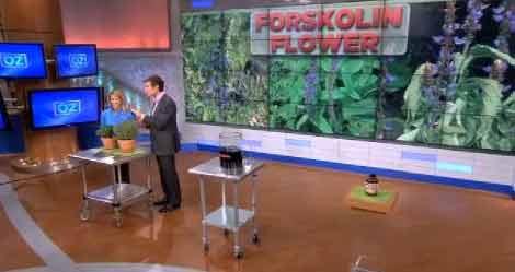 Forskolin diet pills in the media